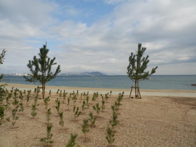 岩屋県民サンビーチ2.jpg