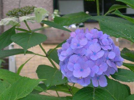 祇園白川9.jpg