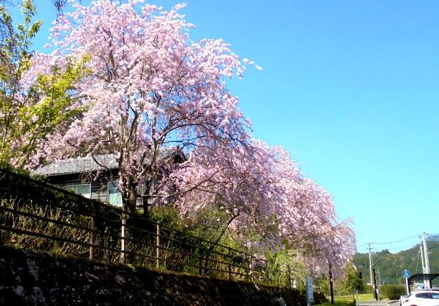 道の駅温泉の里神山5.jpg