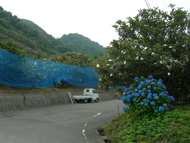 野島地区8.jpg