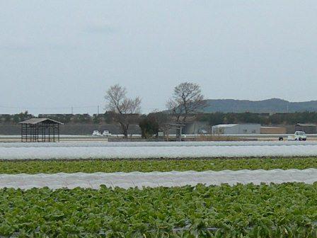 おのころ島神社7.jpg