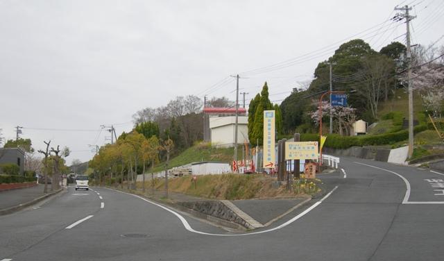水仙の丘1.JPG
