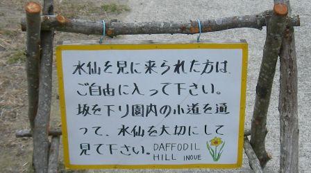 水仙の丘12.JPG