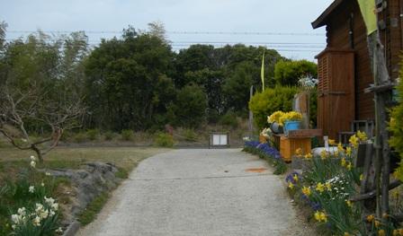 水仙の丘58.JPG