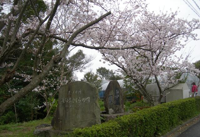 水仙の丘7.JPG