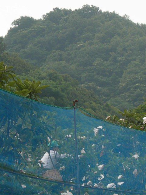 野島地区9.jpg
